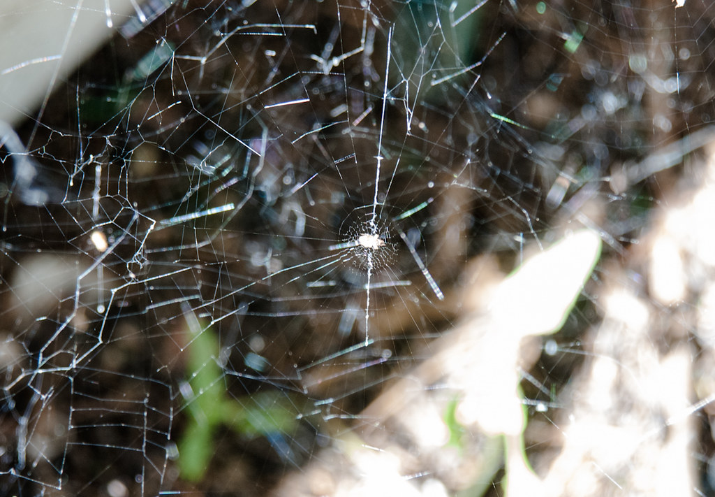 Spider Web Chaos