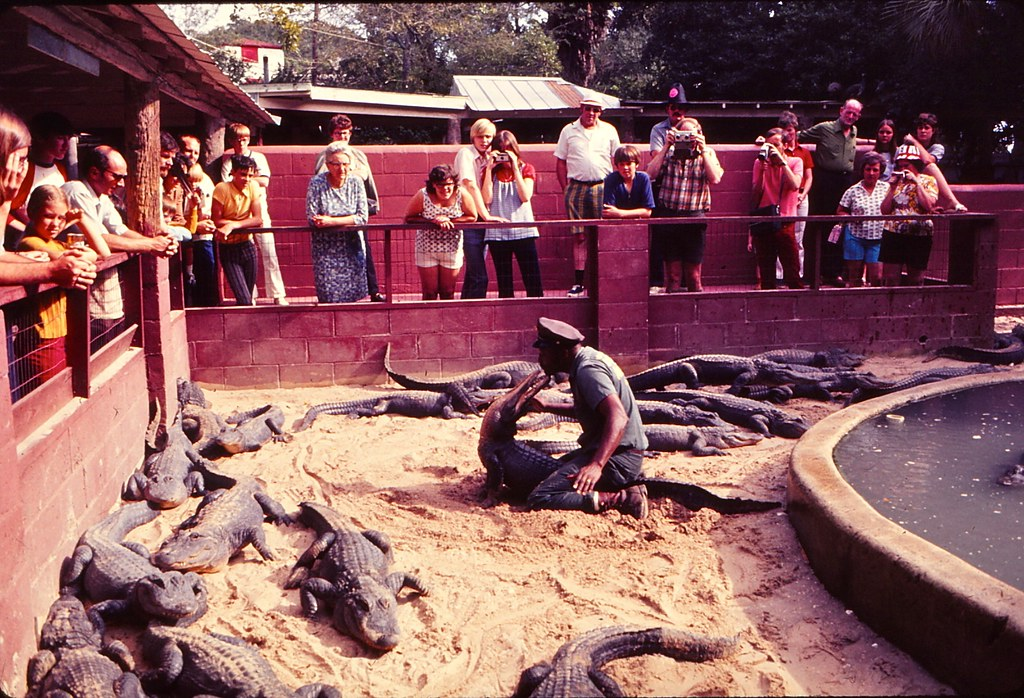 Florida   -   St. Augustine   -   Alligator Farm   -   January 1973
