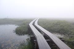 朝靄の尾瀬ヶ原