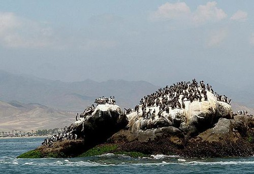 Sea kayaking in Peru with Nature Expeditions 26