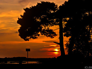 Golden Sunset at Strabrechtse Heide near Someren
