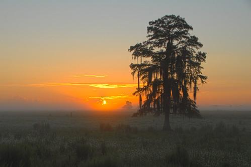 usa mist nature fog rural sunrise landscape dawn florida northamerica wildlifemanagementarea hendrycounty dinnerislandranch september72012 00666778