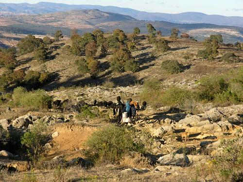 Mixtec Woman and animals returning home - Mujer mixteca y sus animales regresando a la casa en la vereda hacia San Juan Diuxi, Región Mixteca, Oaxaca, Mexico