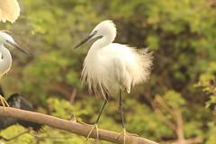 great egret(0.0), white stork(0.0), animal(1.0), fauna(1.0), heron(1.0), beak(1.0), bird(1.0), wildlife(1.0), egret(1.0),