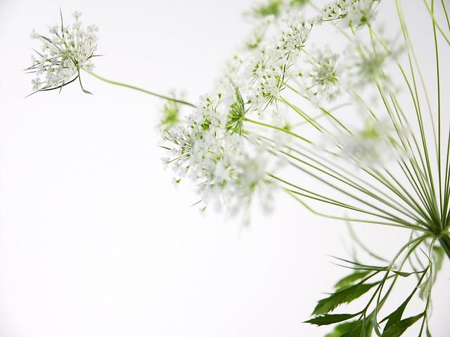 Flor-silvestre-620027