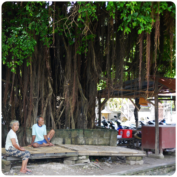 Nusa Penida Long Tree