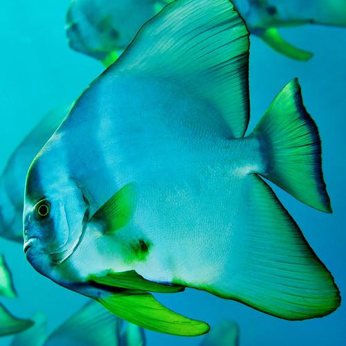 [フリー画像素材] 動物, 魚類 ID:201209300400