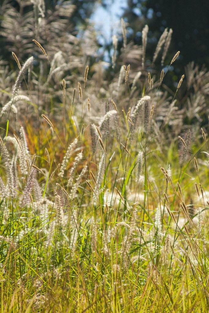 Grass Mass