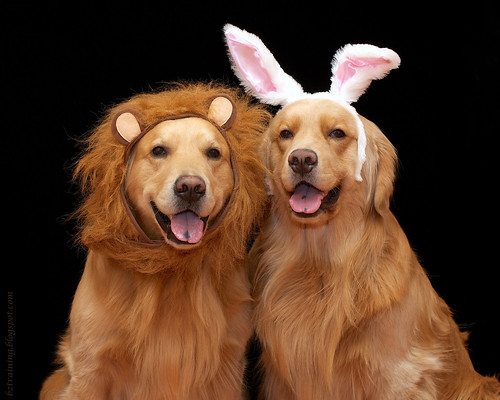 Lion and Bunny