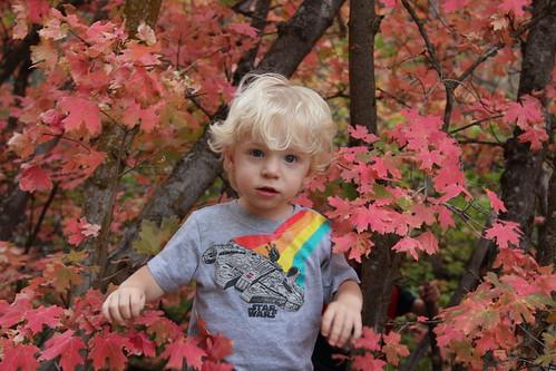 Gavin in the colors 1