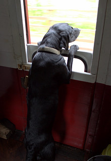Emmy Guard training in the guards van