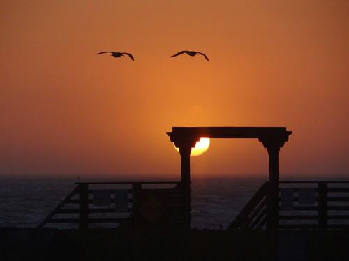 ocean california sunset birds californiacoast californiastatepark