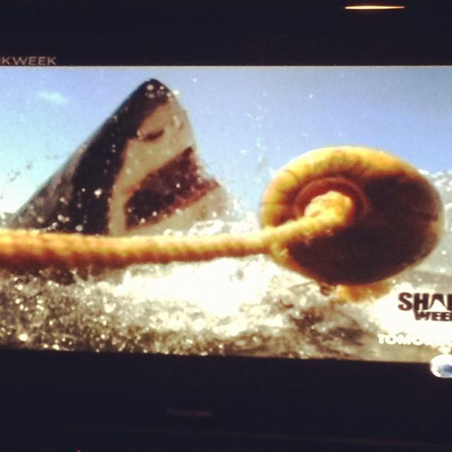 shark week 2012 (2)