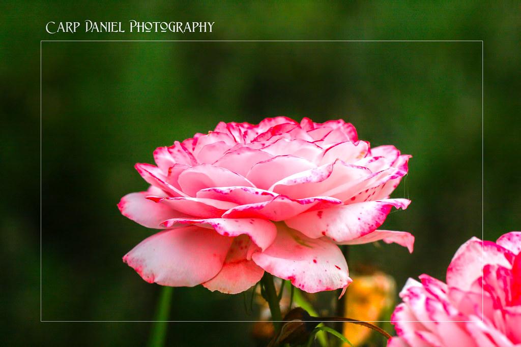 IMAGE: http://farm9.staticflickr.com/8298/7814038068_029179a8ec_b.jpg