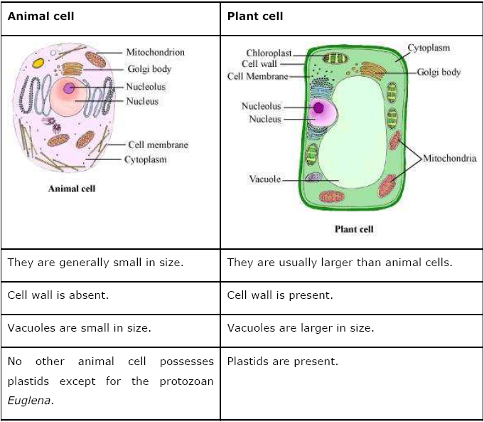difference between plant and animals Llesson plan: plant and animal cellsesson plan: plant and animal cells oobjectivebjective sstudents will learn about the main components of both animal and plant cells tudents will learn about the main components of both animal and plant cells.