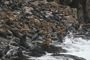 Swimming with sea lions in Peru with Nature Expeditions (10)