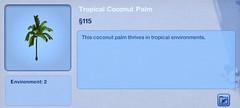 Tropical Coconut Palm