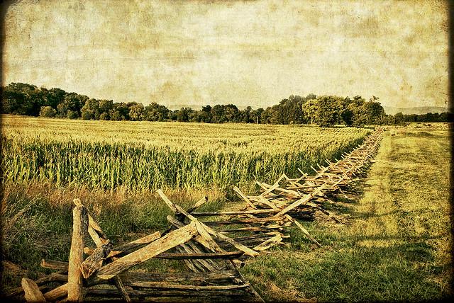 Antietam the cornfield flickr photo sharing