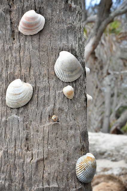 tree with shells 1