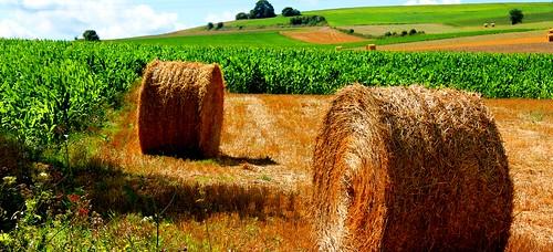 [フリー画像素材] 自然風景, 田園・農場, 干し草, 風景 - フランス ID:201209021200