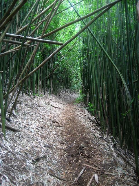 Hawaii - August 2012 138
