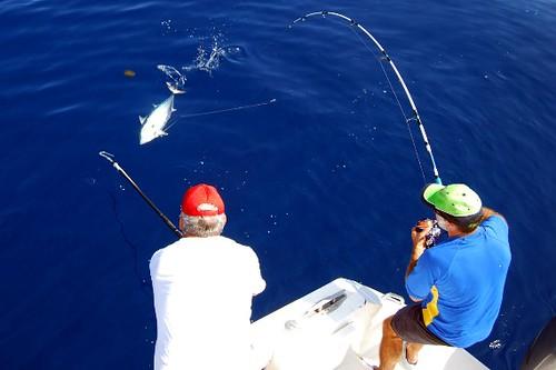 pesca altura 31 2