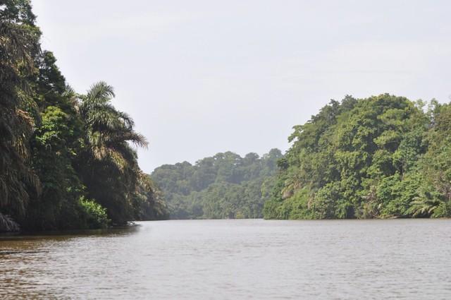 Parte ancha del canal que tras casi 2 horas de viaje y entre cocodrilos, nos lleva a Tortuguero Tortuguero - 7950147706 531cf69951 z - Tortuguero, entre la tranquilidad y la vida salvaje
