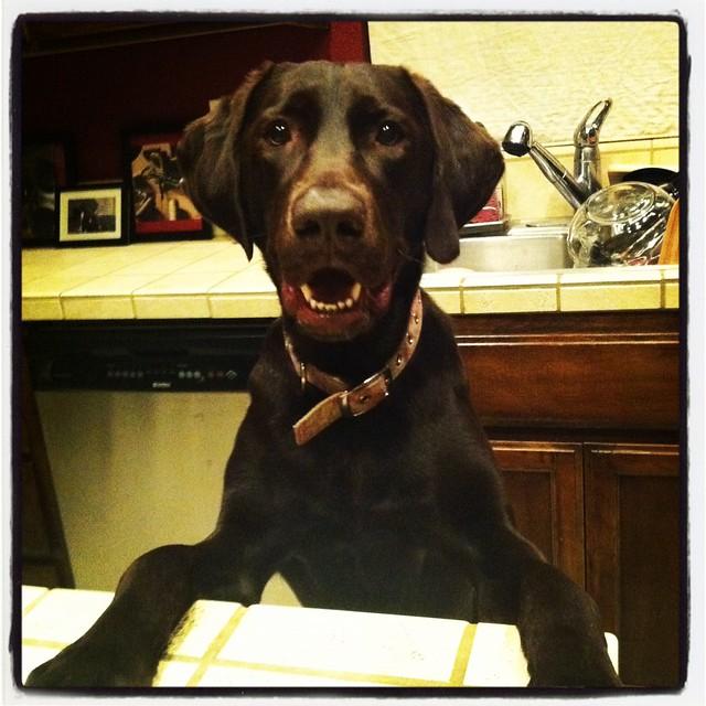 Dog Fashion Colars por Hermione Black