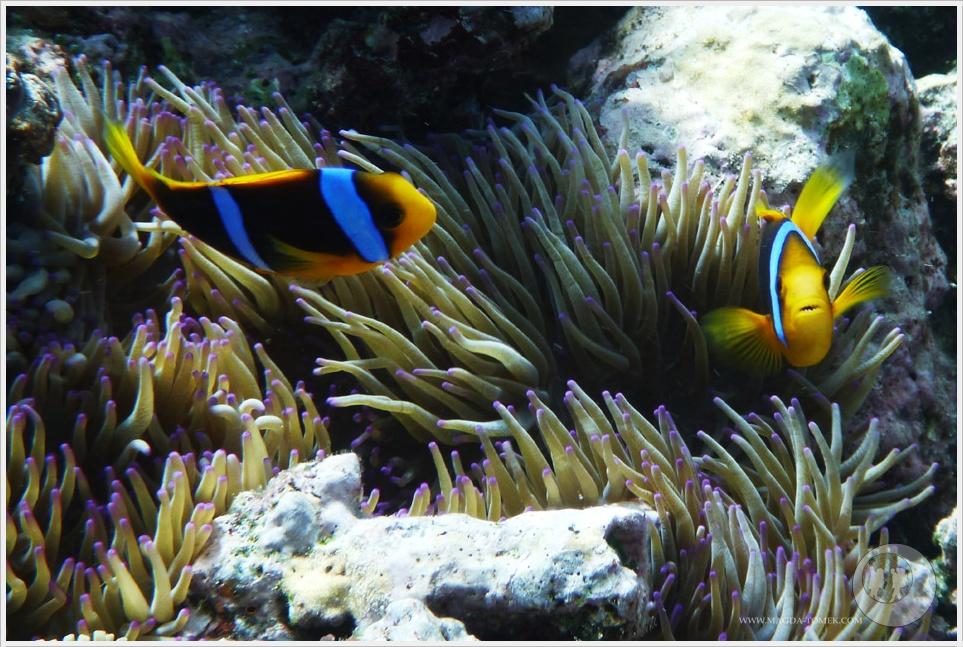 2012 07 23_Magda i Tomek Dookola Swiata_Fiji_P1040198