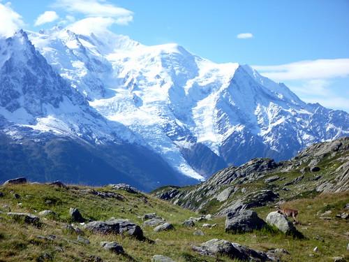 Bouquetin devant le Mont Blanc
