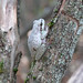 Tree Frog (Roy Taylor)