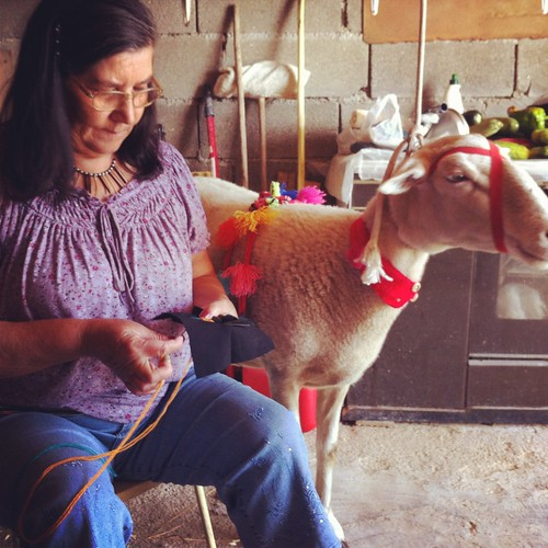 d. ângela e a ovelha mocha