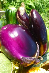 vegetable, eggplant, purple, produce,