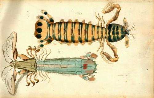 015-Â Versuch einer Naturgeschichte der Krabben und Krebse- 1790- Johann Friedrich Wilhelm Herbst- Humboldt University
