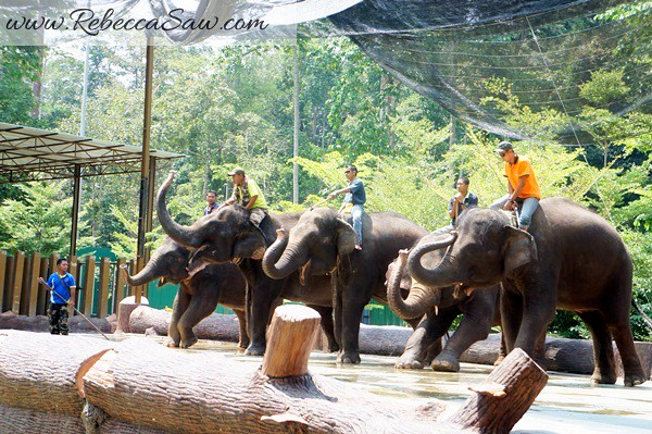 Malaysia Tourism Hunt 2012 - National Elephant Conservation Centre-001