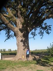 Big Oak and Me