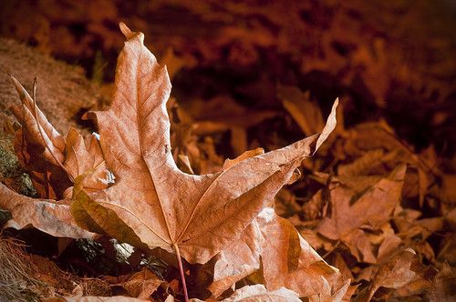 Portrait of a Leaf by petetaylor