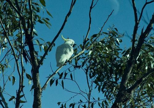 noisly-parot-bird