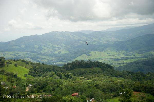 RYALE_Costa Rica_1