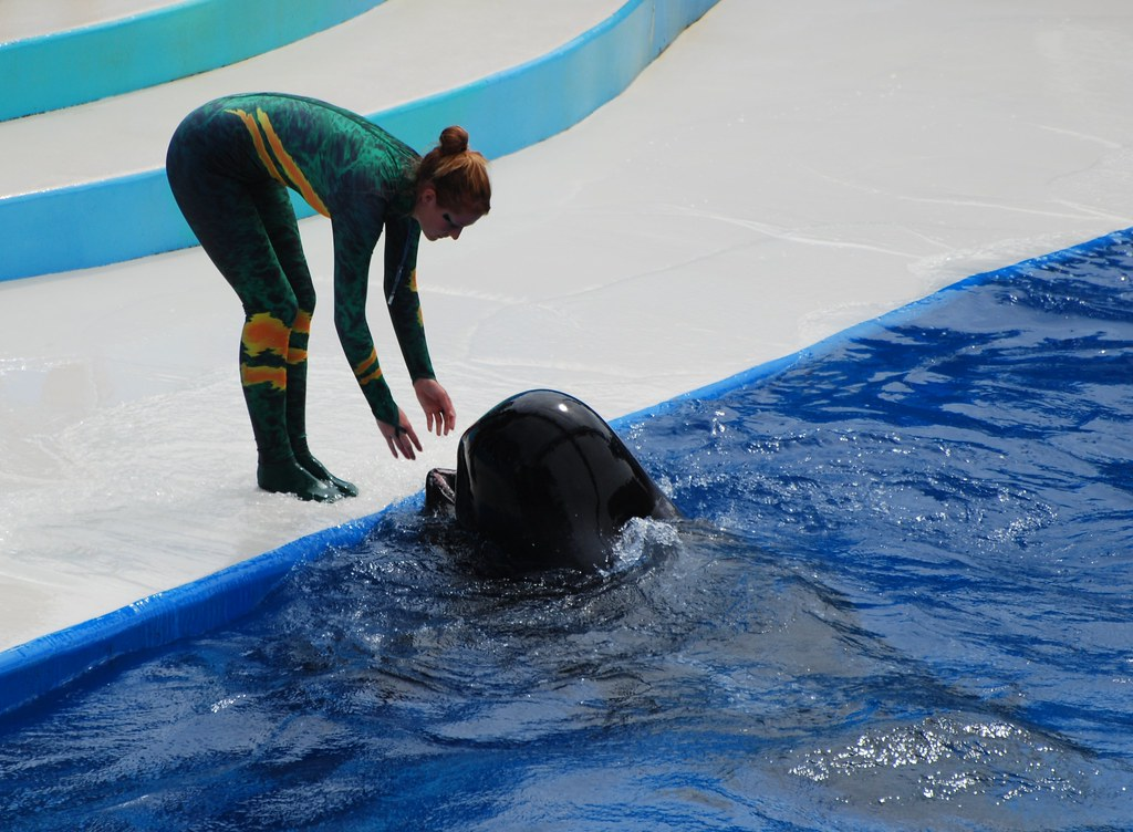 Incidents At Seaworld Parks: SeaWorld Stranded Whale Caught On Video