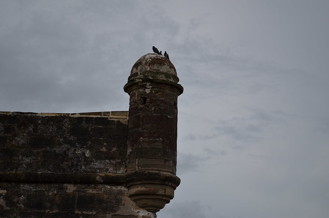 Pigeons on fortress!