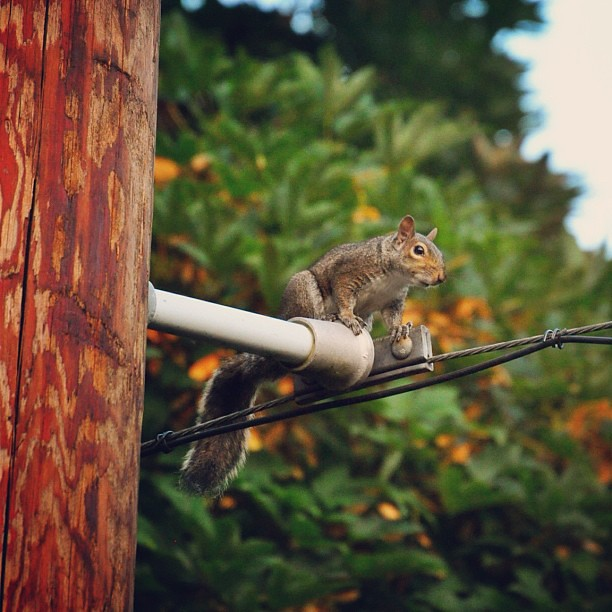 Evening squirrel