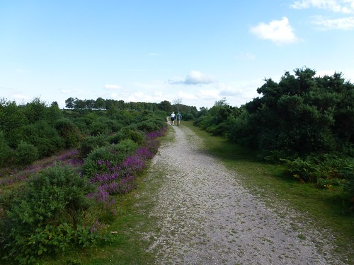 New Forest - Heathland path