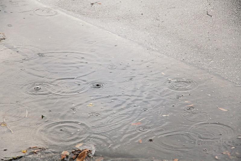fresh rain 5