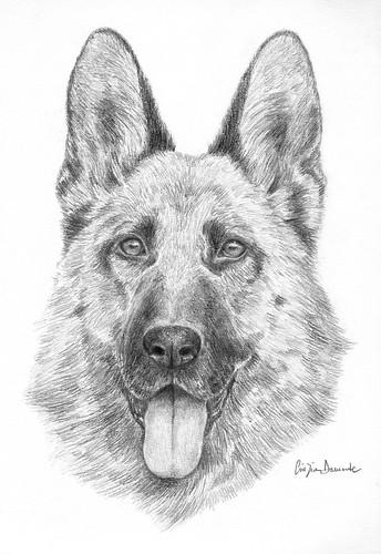 Disegno Libero Vuoi un ritratto del tuo cane o di una persona a te cara? Clicca  e visita il mio nuovo blog:) .