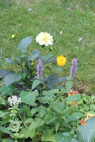 Le jardin de Laurent - Page 3 7883660426_91c9796f6d