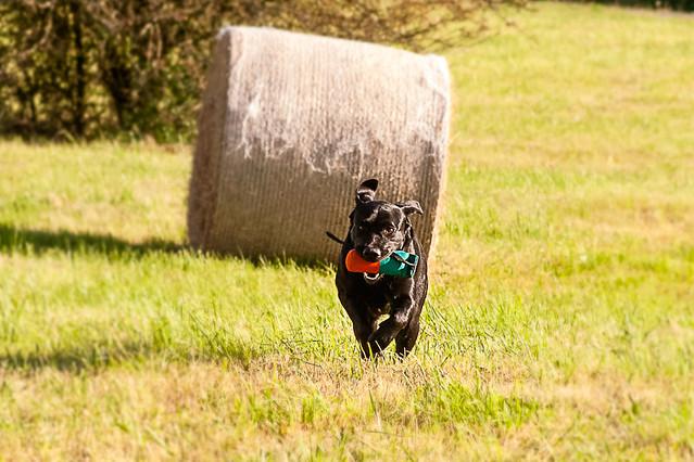 Dummy Dog Training Collar