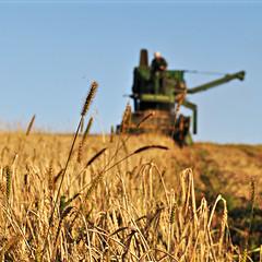 prairie, agriculture, farm, food grain, field, plant, harvest, crop, rural area, harvester,