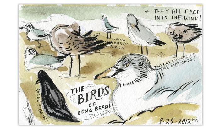 Birds_700