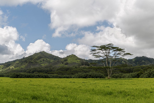 mountain tree nature field grass clouds landscape island hawaii unitedstates meadow kauai poipu lihue highway520 kahoano maluhiard tonyvanlecom